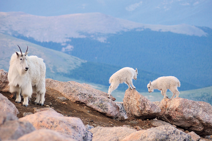 Mount Evans Family Outing